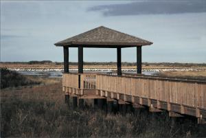 Boardwalk at Cameron Wildlife Center