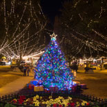 nights-of-lights-plaza-tree