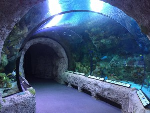 Tunnel in Aquarium